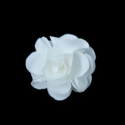 simple flower in white